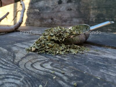 moringa foglie bio