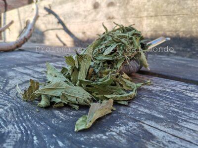 stevia foglie bio